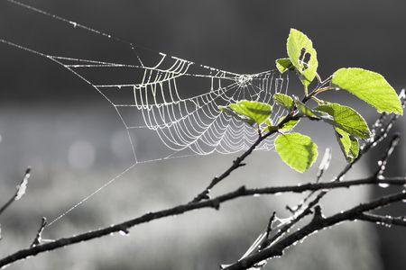 Web on a tree in sun rays Foto de archivo