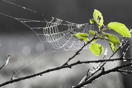 spiders: Web on a tree in sun rays Stock Photo
