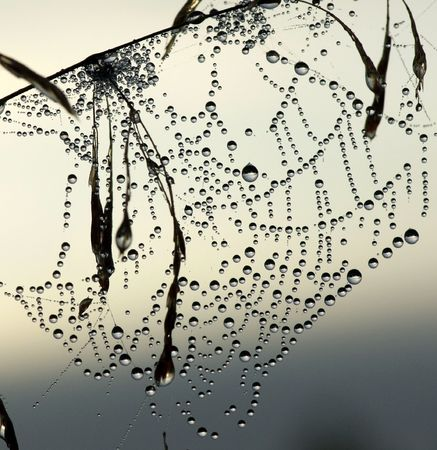 The abstract web in dew 版權商用圖片