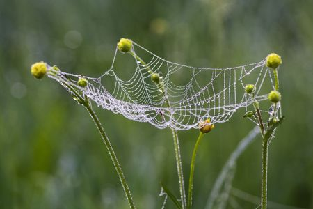 Web hanging on colors of a buttercup photo