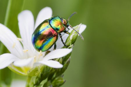 clr: Multi-colored bug on a flower