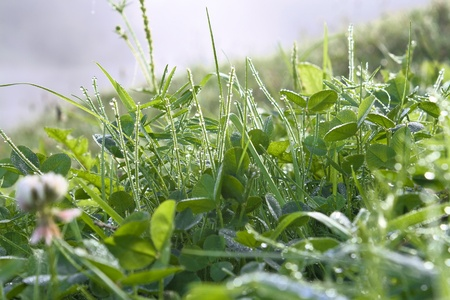 The green grass with dew drops shines in sun beams photo