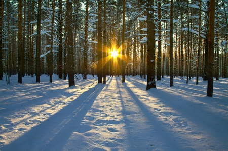 Sunset in winter Stock Photo - 8990980