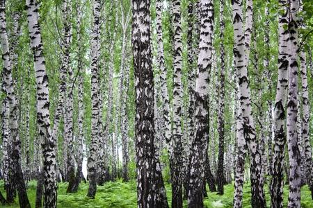 urban jungle: Paisaje de verano con un follaje de madera y verde  Foto de archivo