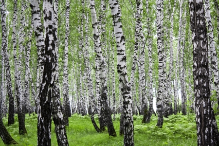 arboleda: Paisaje de verano con un follaje de madera y verde  Foto de archivo