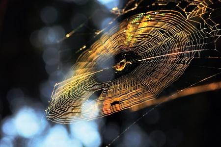Web in sun beams Stock Photo