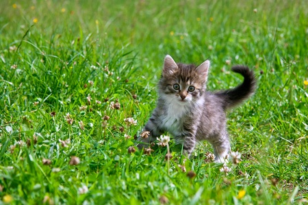 Kitten on a grass photo