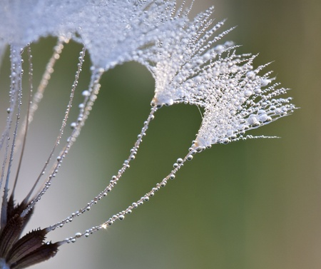 Dew drops on a grass in the morning 版權商用圖片 - 10400258