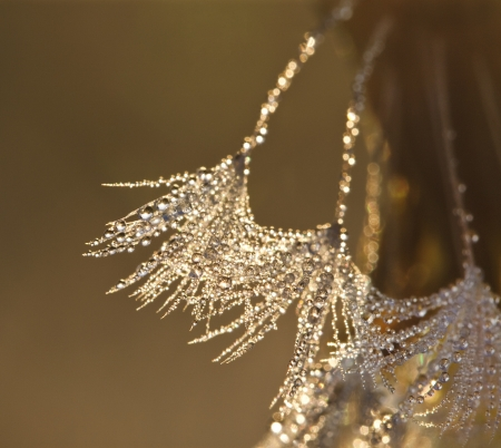Dew drops on a grass in the morning photo