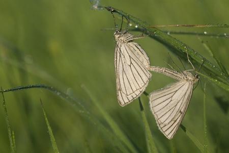 Two butterflies on a meadow photo
