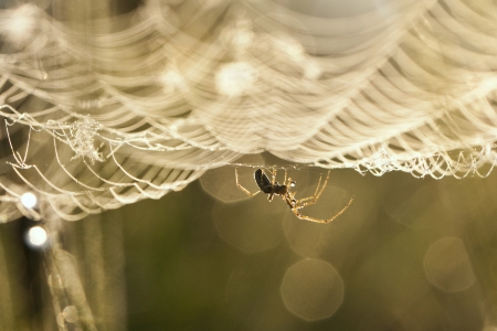 spider on a web Stock Photo - 17668941