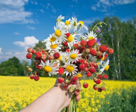 bouquet from berries of wild strawberry and field camomiles Stock Photo - 14669764