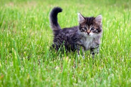 Kitten on a grass 版權商用圖片 - 13495905