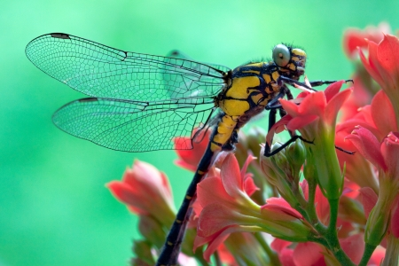 dragonfly on a beautiful red flower