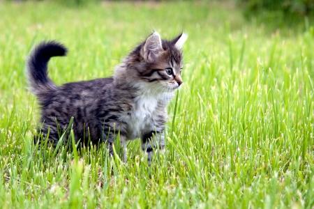 Kitten on a grass
