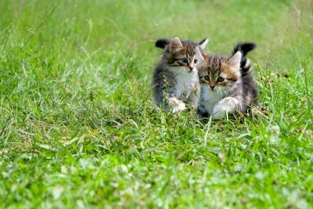 Kittens 版權商用圖片 - 16935366