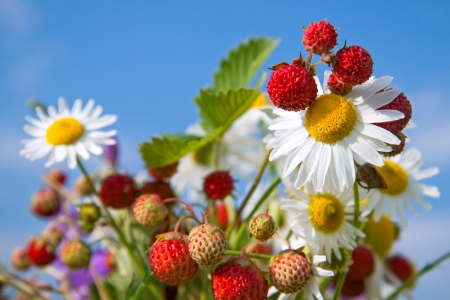 Bouquet from berries of wild strawberry and field camomiles Stock Photo - 16935357