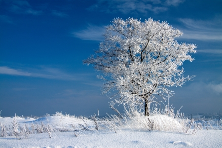 wintery day: beautiful winter landscape with a lonely tree