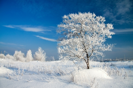 beautiful winter landscape with a lonely tree photo