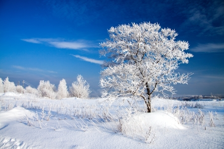 beautiful winter landscape with a lonely tree