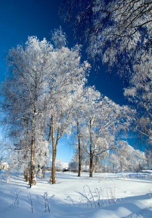 winter landscape with the village photo