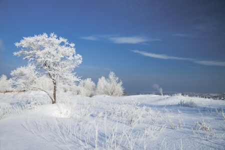 winter landscape with a lonely tree photo