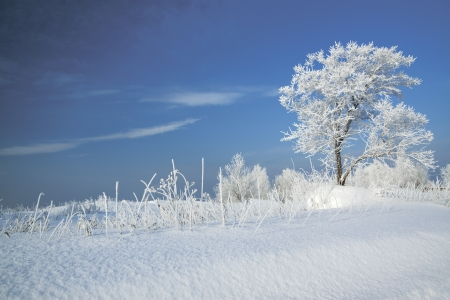 winter landscape with a lonely tree