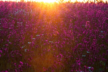 blossoming meadow in sun beams photo