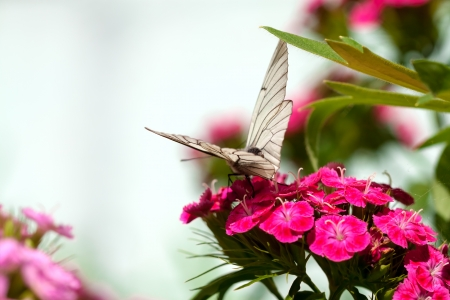 the beautiful white butterfly sits on flowers Stock Photo - 20427544
