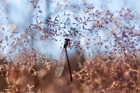 the beautiful dragonfly sits on a summer meadow photo