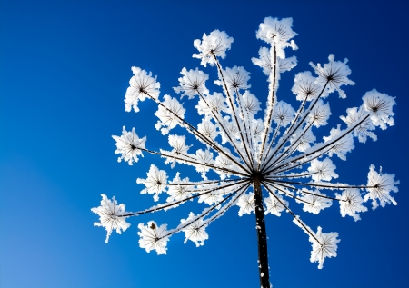 plant covered with snow against the blue sky Foto de archivo
