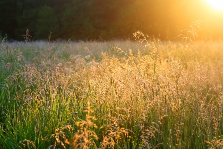 beautiful rural landscape with sunrise over a meadow photo