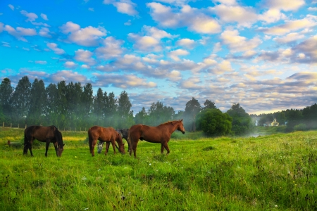 rural landscape with horses being grazed on a pasture