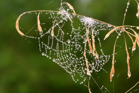 background from a web with drops of dew  photo