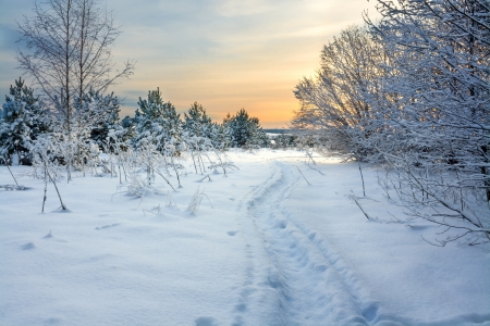 beautiful winter landscape with the wood and the blue sky Banque d'images