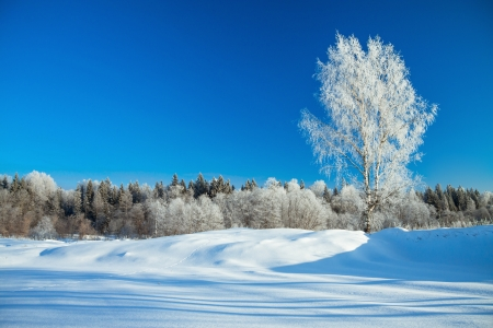 beautiful winter rural landscape with the blue sky and the wood