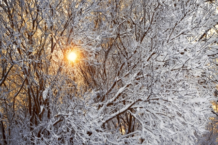 winter landscape with the wood and the sun photo