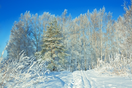 beautiful winter landscape with the forest and the blue sky photo
