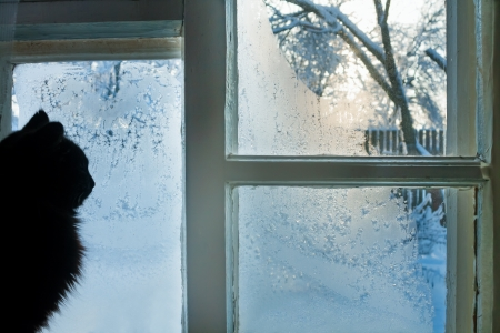 the cat looks at the street through the frozen winter window 版權商用圖片 - 22507957