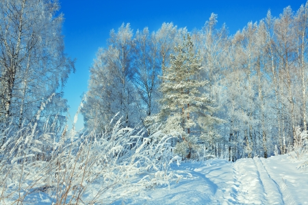 winter landscape with the forest and the blue sky photo