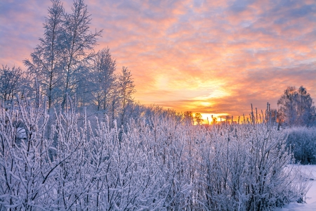 winter landscape with sunset in the forest