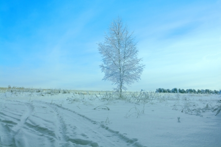 beautiful winter landscape with a tree and the blue sky photo