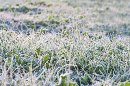 abstract background from a grass covered with hoarfrost photo