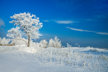 winter landscape with a lonely tree and the blue sky photo