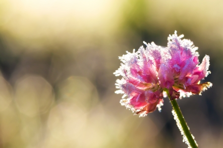 abstract background from a flower covered with hoarfrost photo