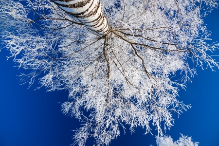 winter forest against the blue sky photo