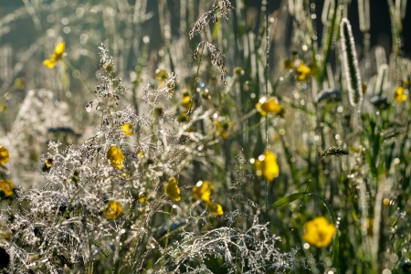 summer meadow at sunrise in sun beams photo