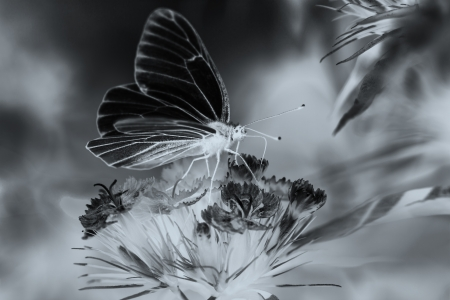 the beautiful white butterfly sits on flowers photo