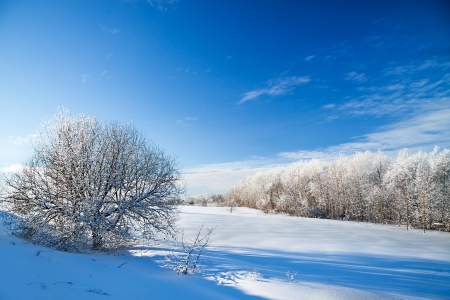 beautiful winter rural landscape with the blue sky and the wood photo