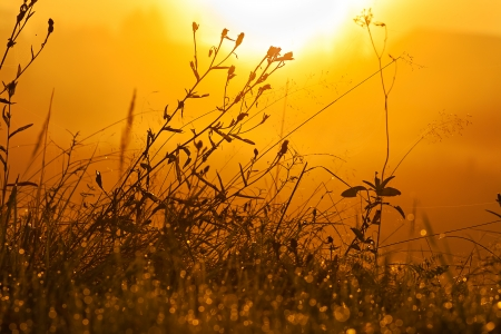 grass silhouette on a summer meadow in sun beams photo